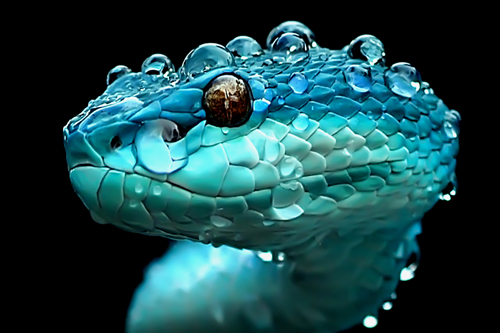 yan hidayat tilsitt gallery pit viper snake (5)