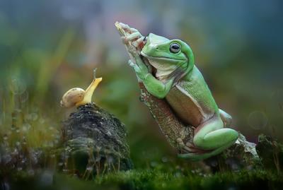 yan hidayat tilsitt gallery pug frog (1)