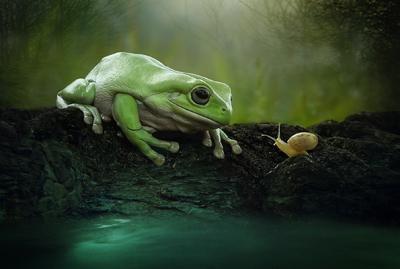 yan hidayat tilsitt gallery pug frog (4)