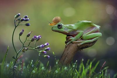 yan hidayat tilsitt gallery pug frog (7)