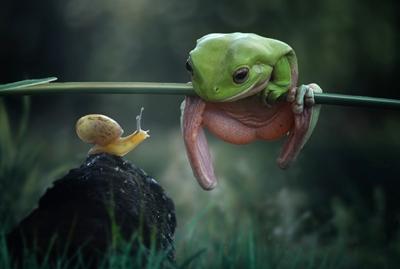 yan hidayat tilsitt gallery pug frog (9)